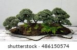 Bonsai And Penjing Landscape...