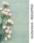 pink carnation | Shutterstock . vector #486169960