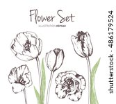 tulip flower vector  set. ink... | Shutterstock .eps vector #486179524