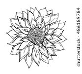 sunflower doodle vector... | Shutterstock .eps vector #486189784