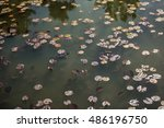 turtle swimming in dwarf... | Shutterstock . vector #486196750