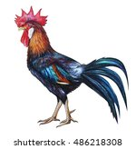 Rooster Red Crest Drawing....