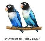 Masked Lovebird Drawing ...