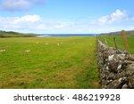 Scottish Countryside  Livestoc...