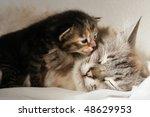 Stock photo cat and her kitten 48629953