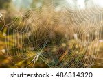 Spider Web Close Up.the Shot O...