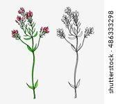 hand drawn wild flower. herbal... | Shutterstock .eps vector #486333298