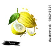 citron isolated on white.... | Shutterstock . vector #486349834