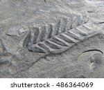 Fossil Leaf Coal