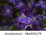 violet flowers | Shutterstock . vector #486434179