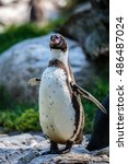 Small photo of An African penguin on the rocks near the water