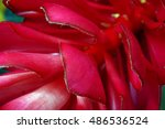Small photo of Red Alpinia flower petals close up for background