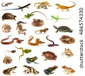 Set Of Amphibians And Reptiles...