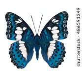 Stock photo beautiful bright blue butterfly common commander moduza procris under wings parts in fancy color 486591349