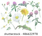 set of summer flowers. daisies  ... | Shutterstock . vector #486622978