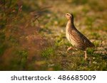 difficult to see small  ground... | Shutterstock . vector #486685009