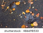 autumn leaves puddle of black... | Shutterstock . vector #486698533