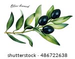 olive branch with ripe black ... | Shutterstock . vector #486722638