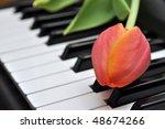 Tulip On Piano