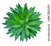agave plant green flower logo... | Shutterstock . vector #486780109