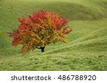 Multi Colored Pear Tree On A...