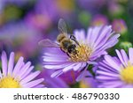 Macro Photo Of Honey Bee  Apis...