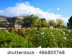 Red White Poppy Flowers And...