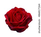 Stock photo dark red rose isolated on a white background 486817264
