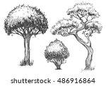 trees set. sketch illustration. ... | Shutterstock .eps vector #486916864