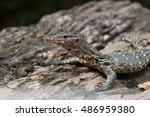 varanus salvator | Shutterstock . vector #486959380