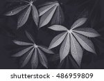 low key dark lighting nature... | Shutterstock . vector #486959809