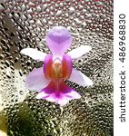 Small photo of This is the orchid Vanda 'Miss Joaquim'. The national flower of Singapore. The background water droplets symbolizes the warm and wet climate of Singapore where this robust flower loves to thrive.