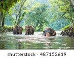 Thailand Elephant Walking In...
