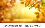 autumn beech leaves decorate a... | Shutterstock . vector #487187950