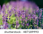 natural flower background.... | Shutterstock . vector #487189993