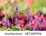 amazing nature of purple... | Shutterstock . vector #487189996