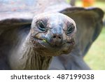A Close Up Of A Tortoise...