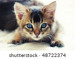 Stock photo ruddy somali kitten 48722374