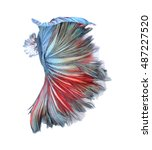 beauty colorful betta fish tail ... | Shutterstock . vector #487227520