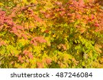 background of branches of... | Shutterstock . vector #487246084