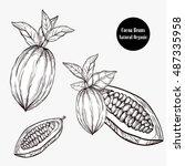 cocoa tree illustration.... | Shutterstock .eps vector #487335958