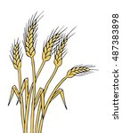 ripe wheat ears isolated ... | Shutterstock .eps vector #487383898
