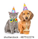 Stock photo dachshund puppy and kitten in birthday hats together with cupcake isolated on white background 487512274