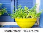 Plants In Yellow Flowerpot...