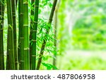 fresh bamboo trees in forest a... | Shutterstock . vector #487806958