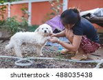 a dog being washed by asian... | Shutterstock . vector #488035438