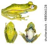 amazonian spotted treefrog ... | Shutterstock . vector #488066128