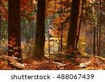 beautiful autumn forest | Shutterstock . vector #488067439