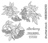 elderberry vector set | Shutterstock .eps vector #488084050
