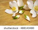 floral fragrant jasmine flowers | Shutterstock . vector #488143480